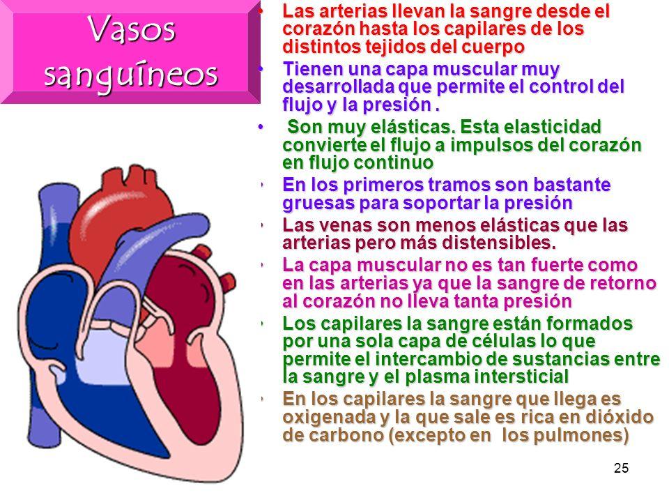 Vasos sanguíneos Las arterias llevan la sangre desde el corazón hasta los capilares de los distintos tejidos del cuerpo.