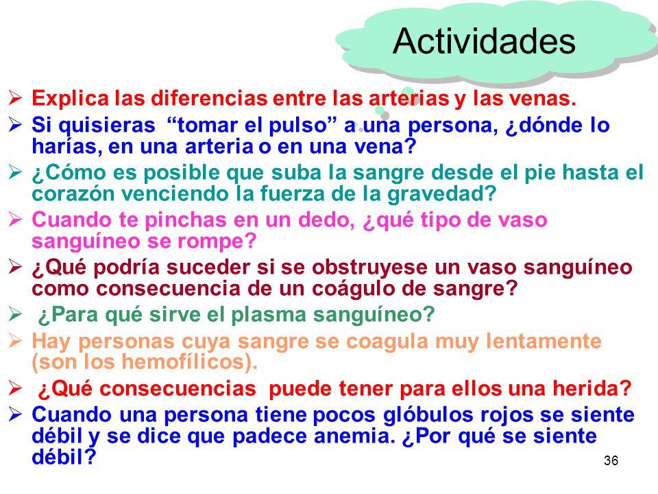 Actividades Explica las diferencias entre las arterias y las venas.