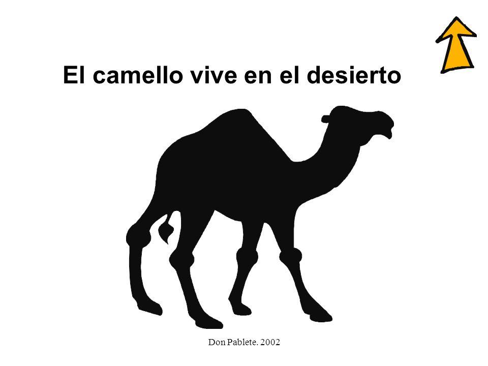 El camello vive en el desierto