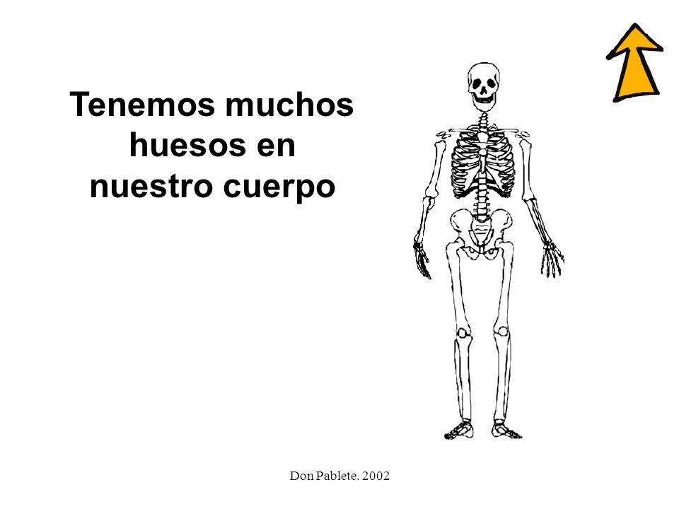 Tenemos muchos huesos en nuestro cuerpo