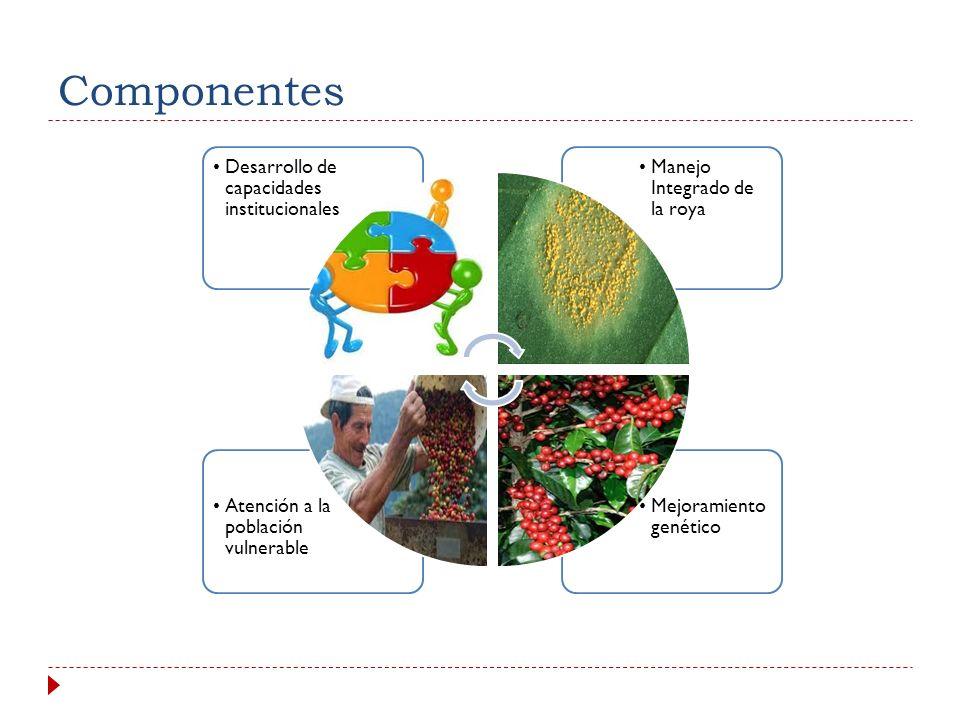 Componentes Desarrollo de capacidades institucionales