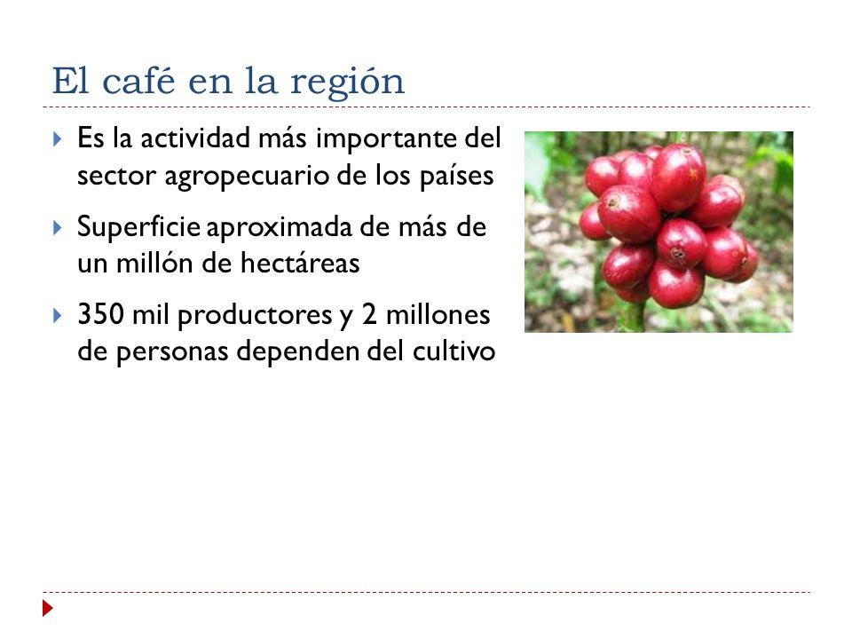 El café en la región Es la actividad más importante del sector agropecuario de los países.
