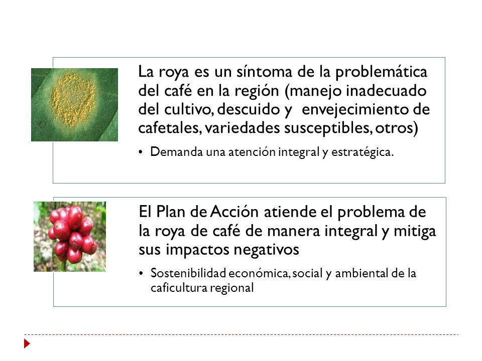 La roya es un síntoma de la problemática del café en la región (manejo inadecuado del cultivo, descuido y envejecimiento de cafetales, variedades susceptibles, otros)