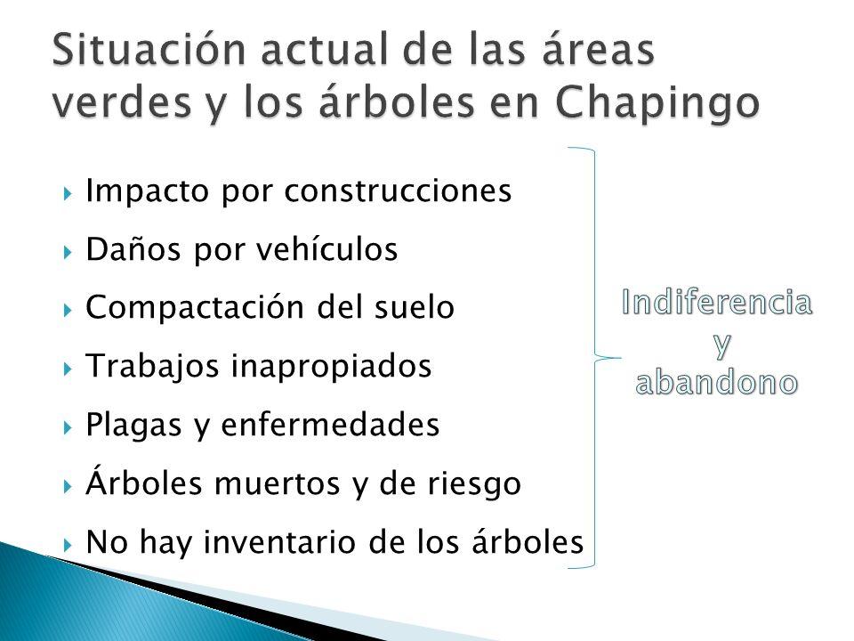 Situación actual de las áreas verdes y los árboles en Chapingo