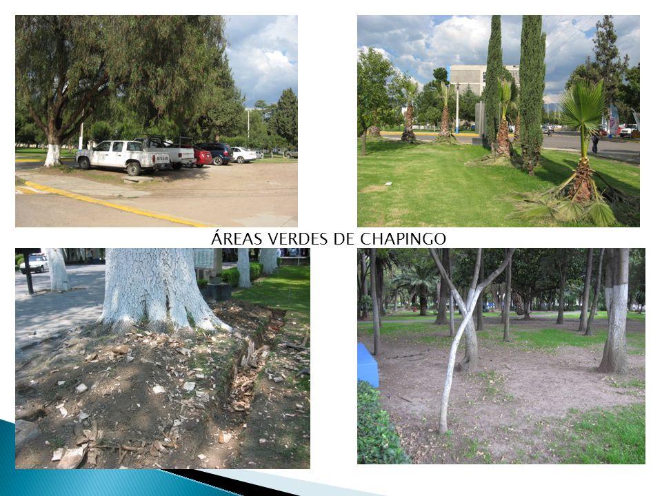 ÁREAS VERDES DE CHAPINGO