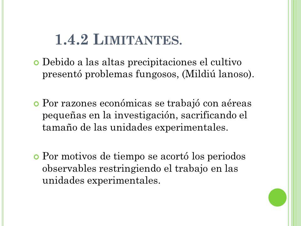 1.4.2 Limitantes. Debido a las altas precipitaciones el cultivo presentó problemas fungosos, (Mildiú lanoso).
