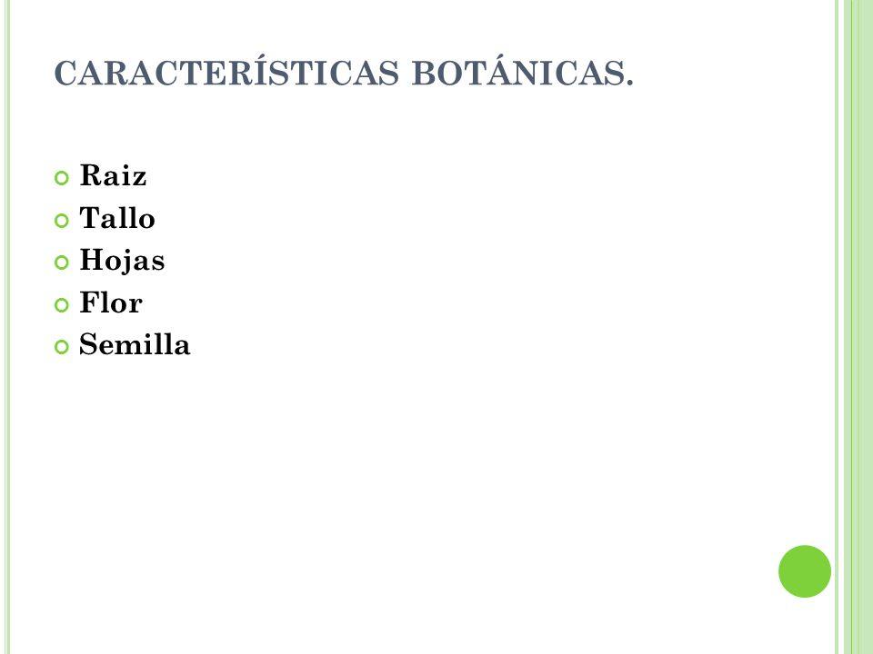 CARACTERÍSTICAS BOTÁNICAS.