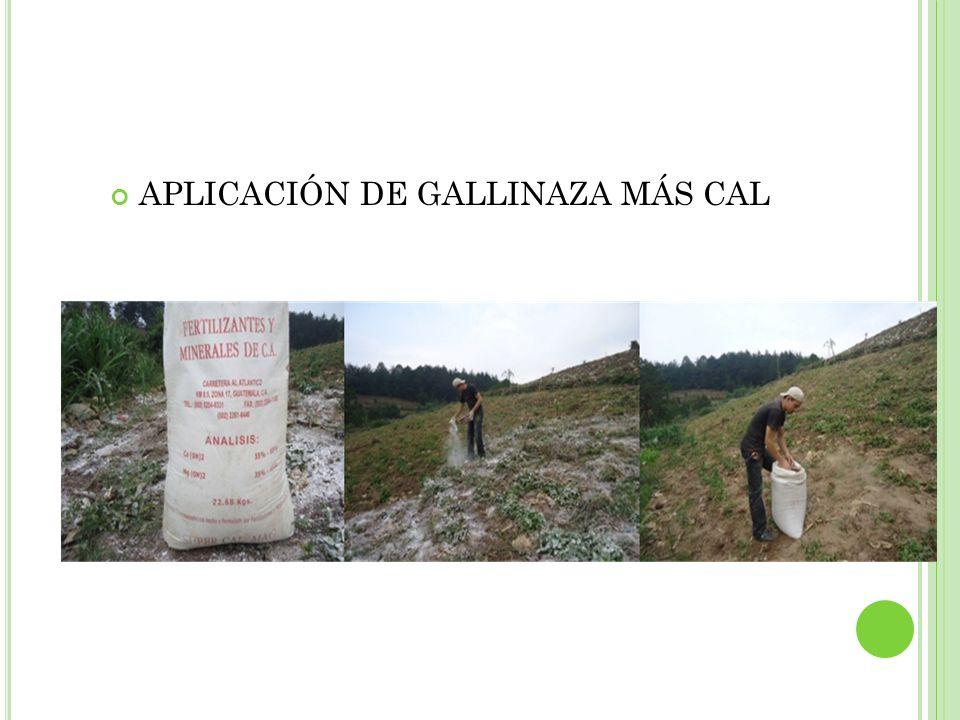 APLICACIÓN DE GALLINAZA MÁS CAL