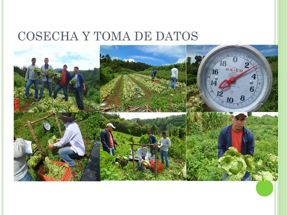 COSECHA Y TOMA DE DATOS