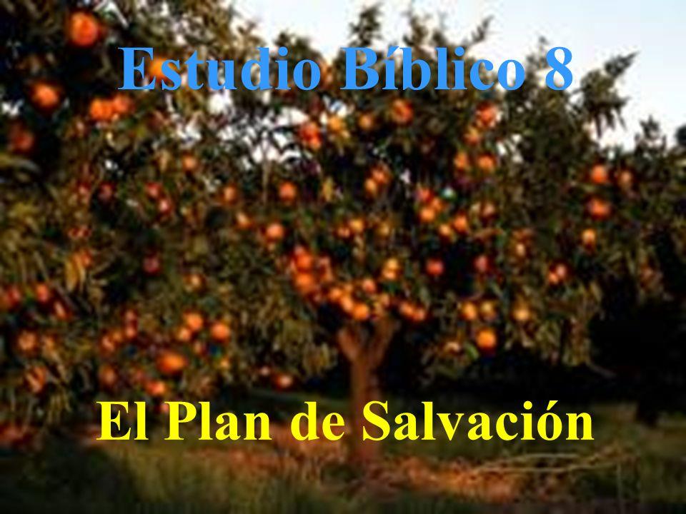 Estudio Bíblico 8 El Plan de Salvación