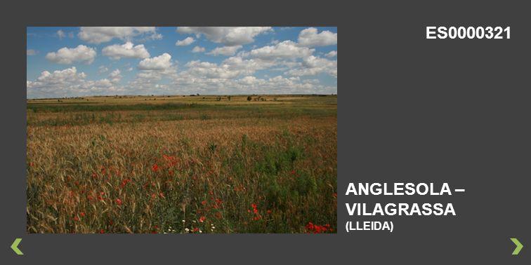 ANGLESOLA – VILAGRASSA