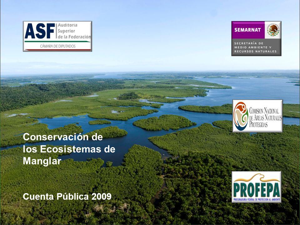 Conservación de los Ecosistemas de Manglar