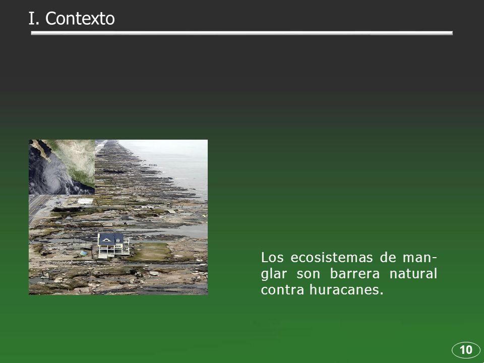 I. Contexto Los ecosistemas de man-glar son barrera natural contra huracanes. 10