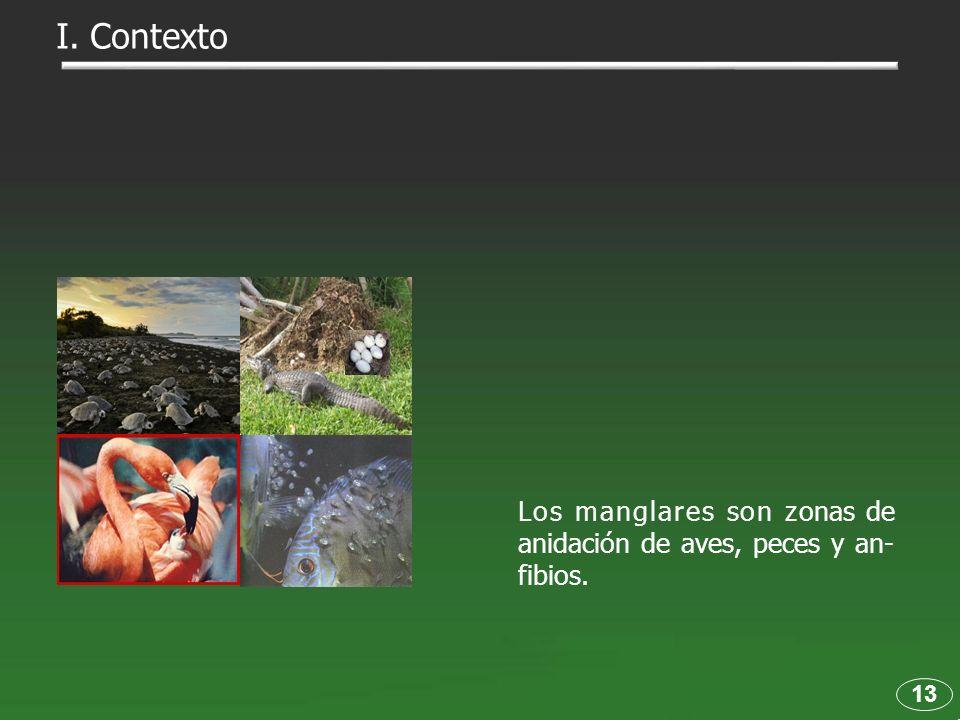 I. Contexto Los manglares son zonas de anidación de aves, peces y an-fibios. 13