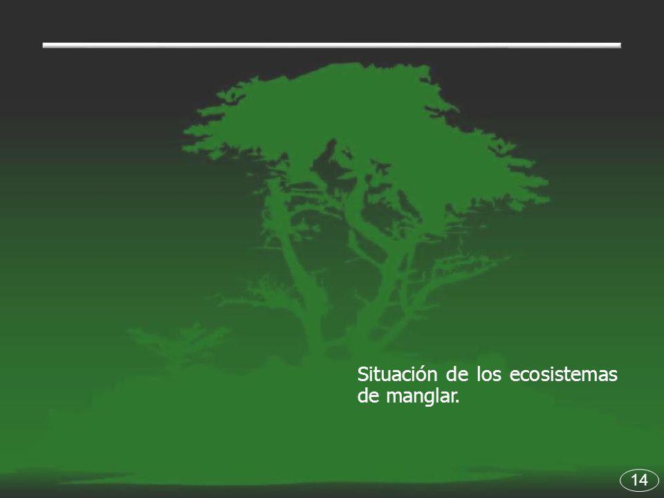 Situación de los ecosistemas de manglar.
