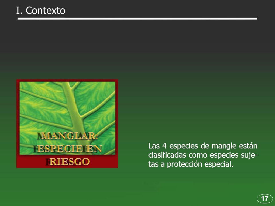 MANGLAR: ESPECIE EN RIESGO