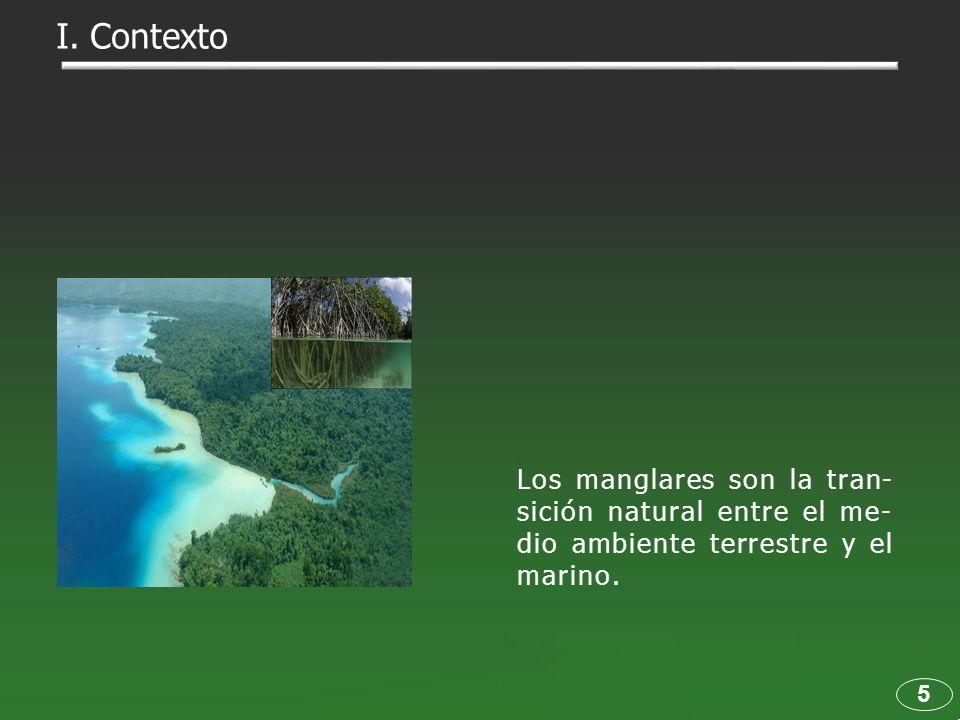 I. Contexto Los manglares son la tran-sición natural entre el me-dio ambiente terrestre y el marino.