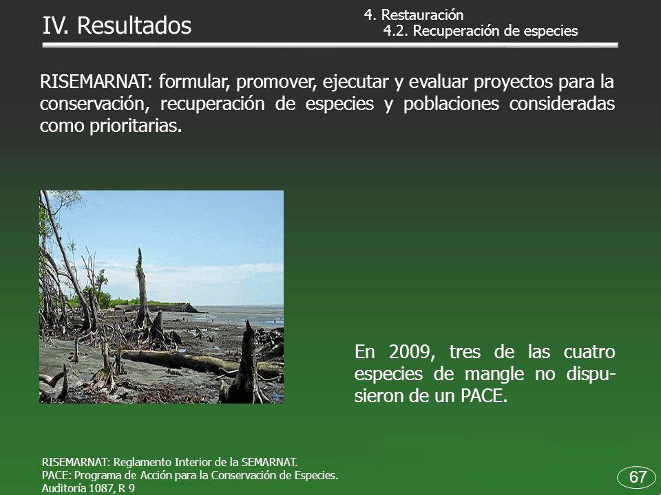 4. Restauración IV. Resultados. 4.2. Recuperación de especies.