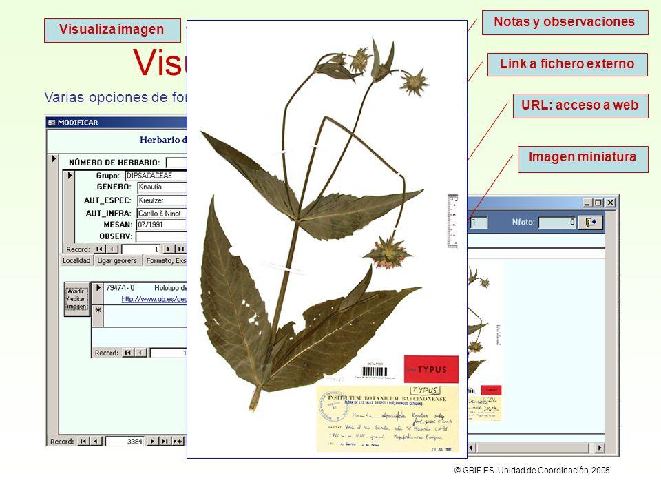 Visualizar la imagen Varias opciones de formato: Notas y observaciones