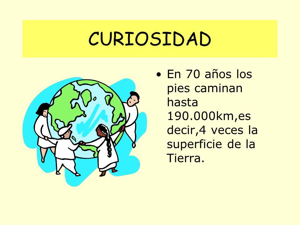 CURIOSIDAD En 70 años los pies caminan hasta 190.000km,es decir,4 veces la superficie de la Tierra.