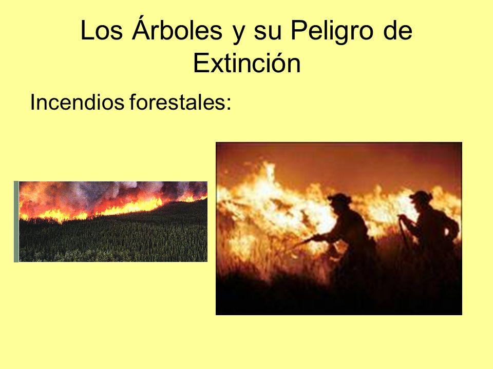 Los Árboles y su Peligro de Extinción