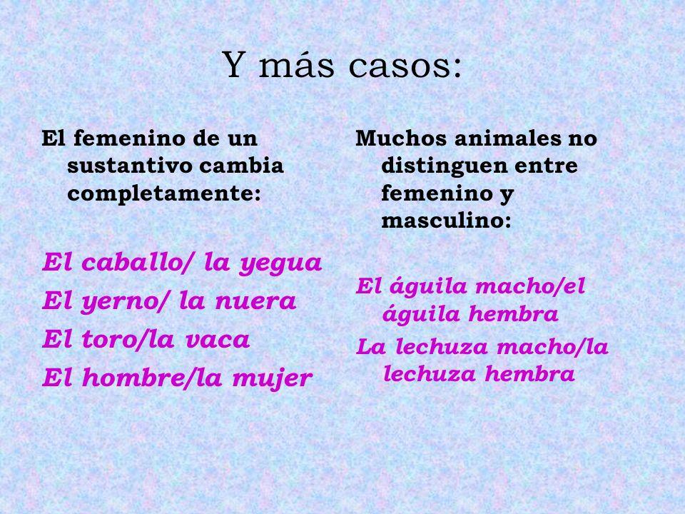 Y más casos: El caballo/ la yegua El yerno/ la nuera El toro/la vaca