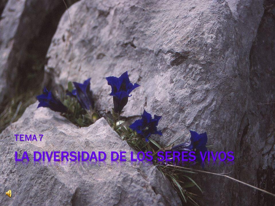 LA DIVERSIDAD DE LOS SERES VIVOS