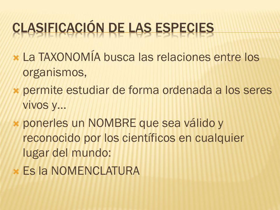 Clasificación de las especies