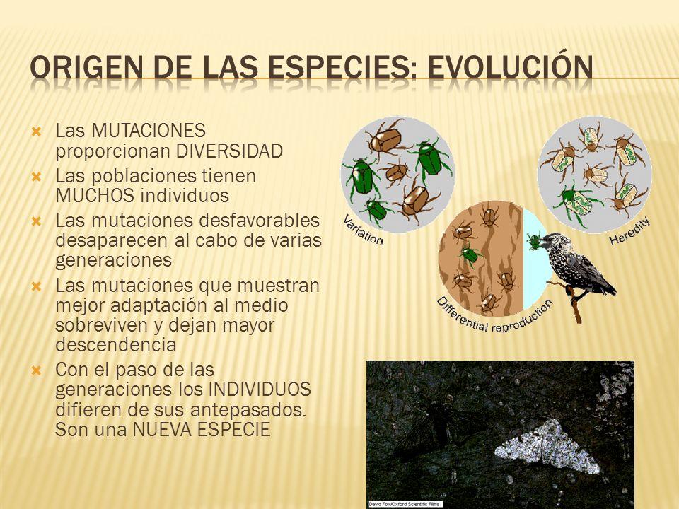 Origen de las especies: EVOLUCIÓN