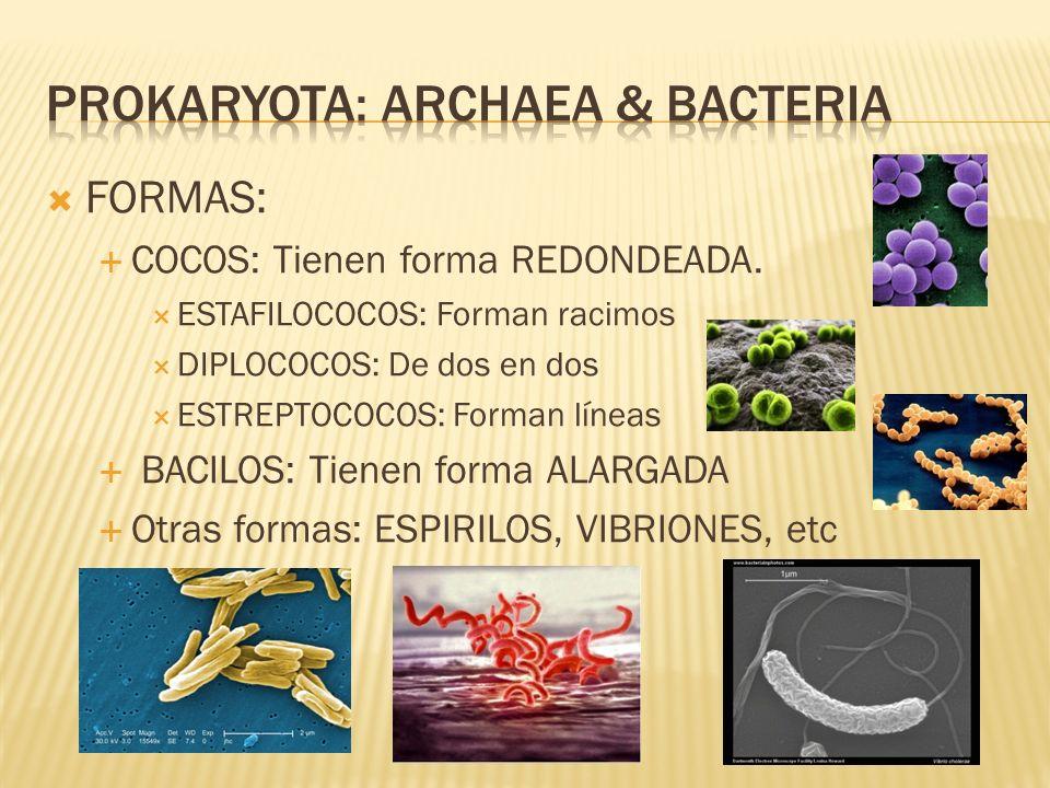 Prokaryota: archaea & bacteria