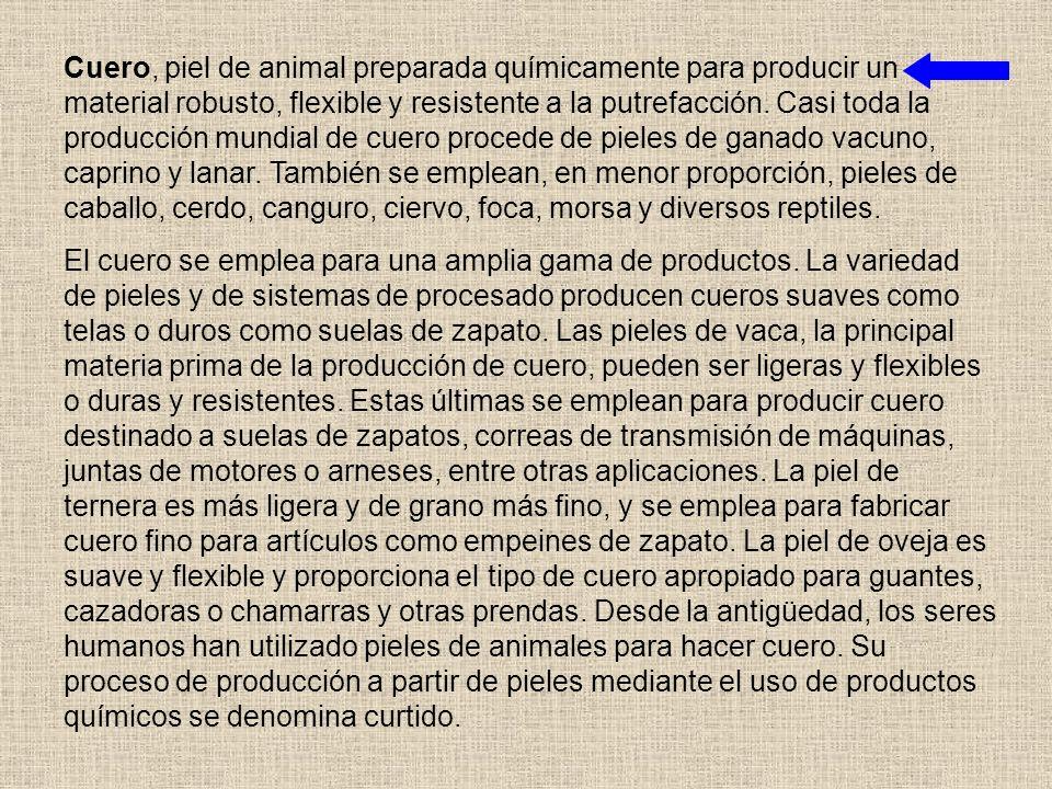 Cuero, piel de animal preparada químicamente para producir un material robusto, flexible y resistente a la putrefacción. Casi toda la producción mundial de cuero procede de pieles de ganado vacuno, caprino y lanar. También se emplean, en menor proporción, pieles de caballo, cerdo, canguro, ciervo, foca, morsa y diversos reptiles.
