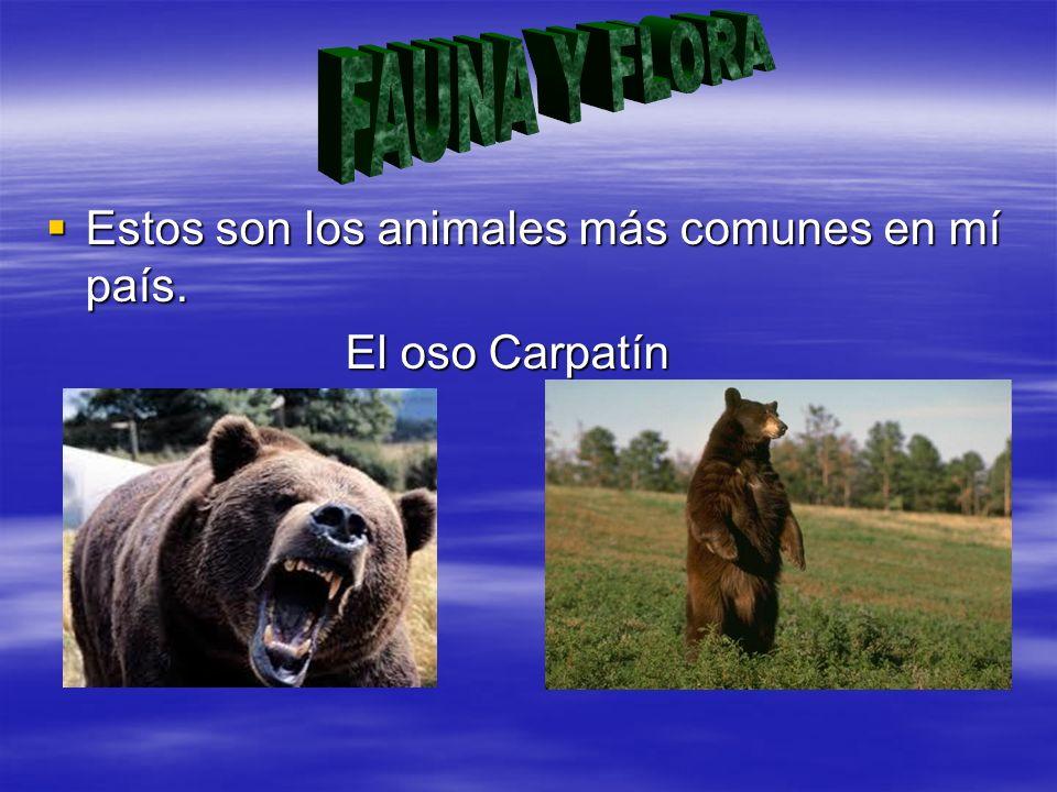 FAUNA Y FLORA Estos son los animales más comunes en mí país.