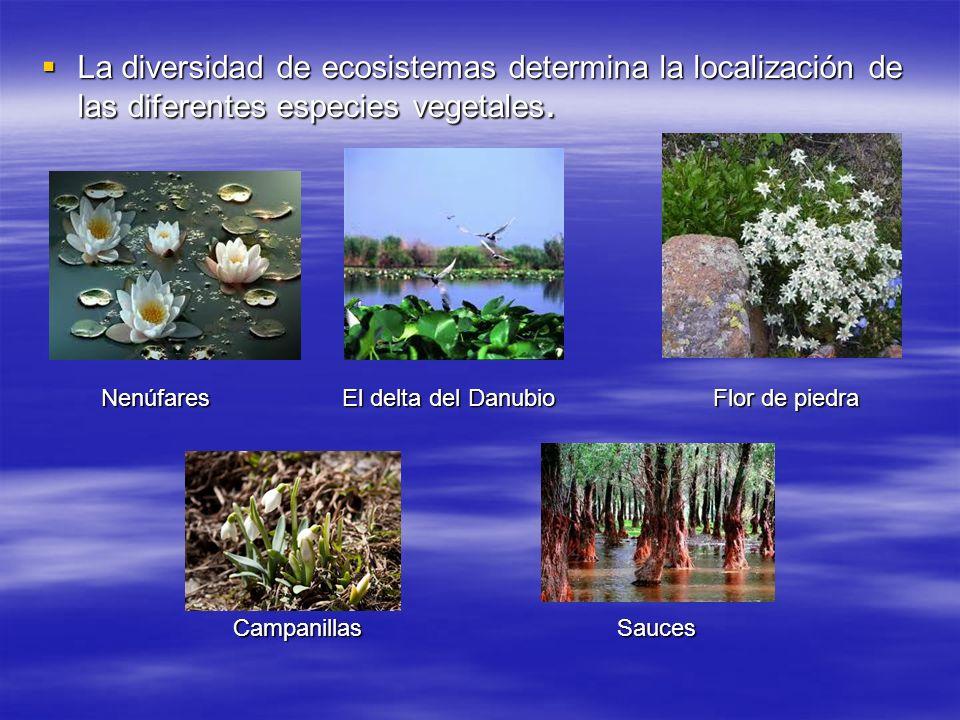 La diversidad de ecosistemas determina la localización de las diferentes especies vegetales.