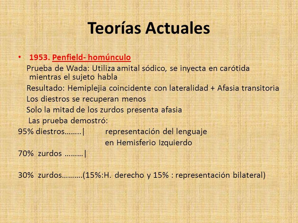 Teorías Actuales 1953. Penfield- homúnculo