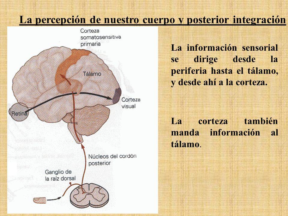 La percepción de nuestro cuerpo y posterior integración