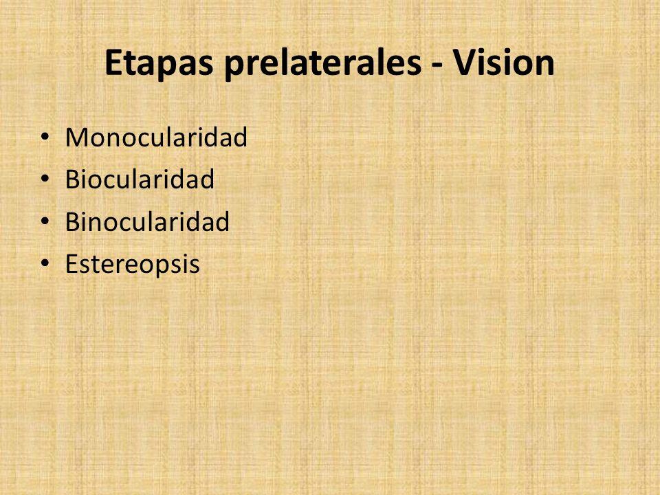 Etapas prelaterales - Vision