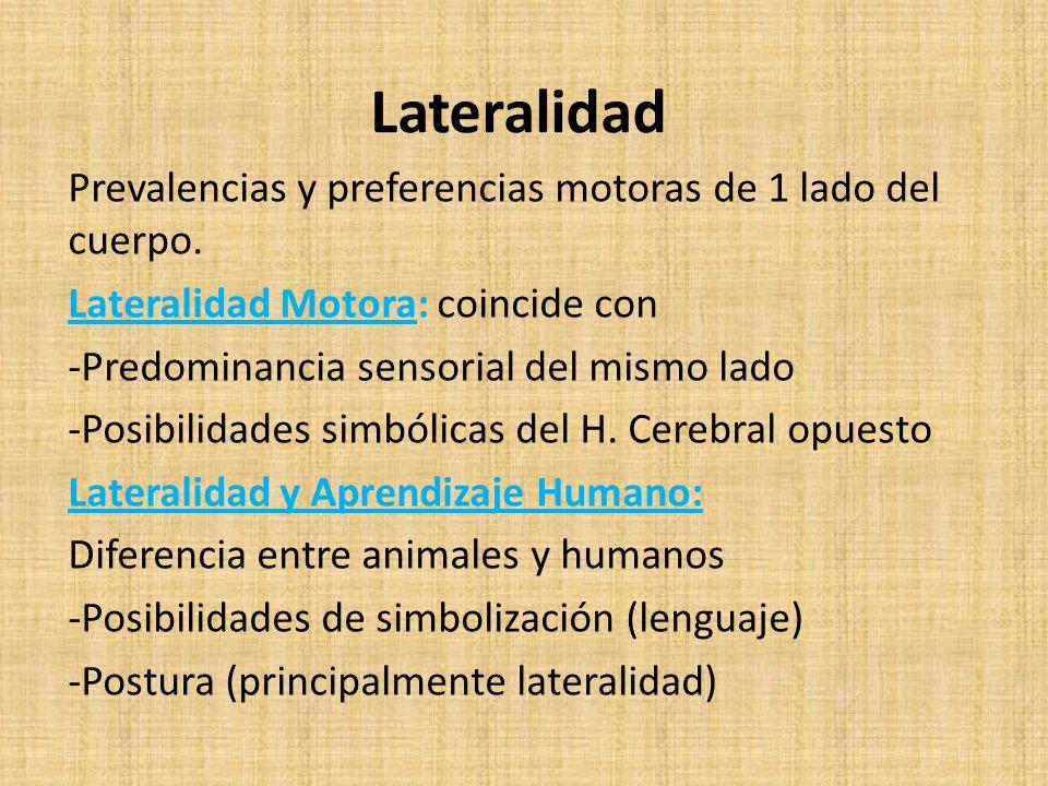 Lateralidad Prevalencias y preferencias motoras de 1 lado del cuerpo.