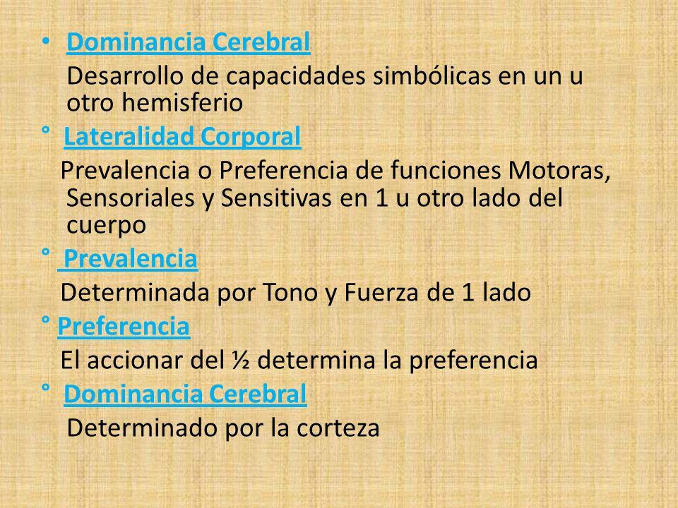 Dominancia Cerebral Desarrollo de capacidades simbólicas en un u otro hemisferio. ° Lateralidad Corporal.