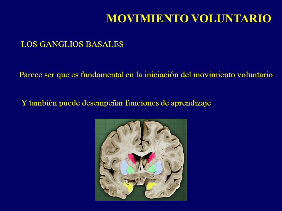 MOVIMIENTO VOLUNTARIO