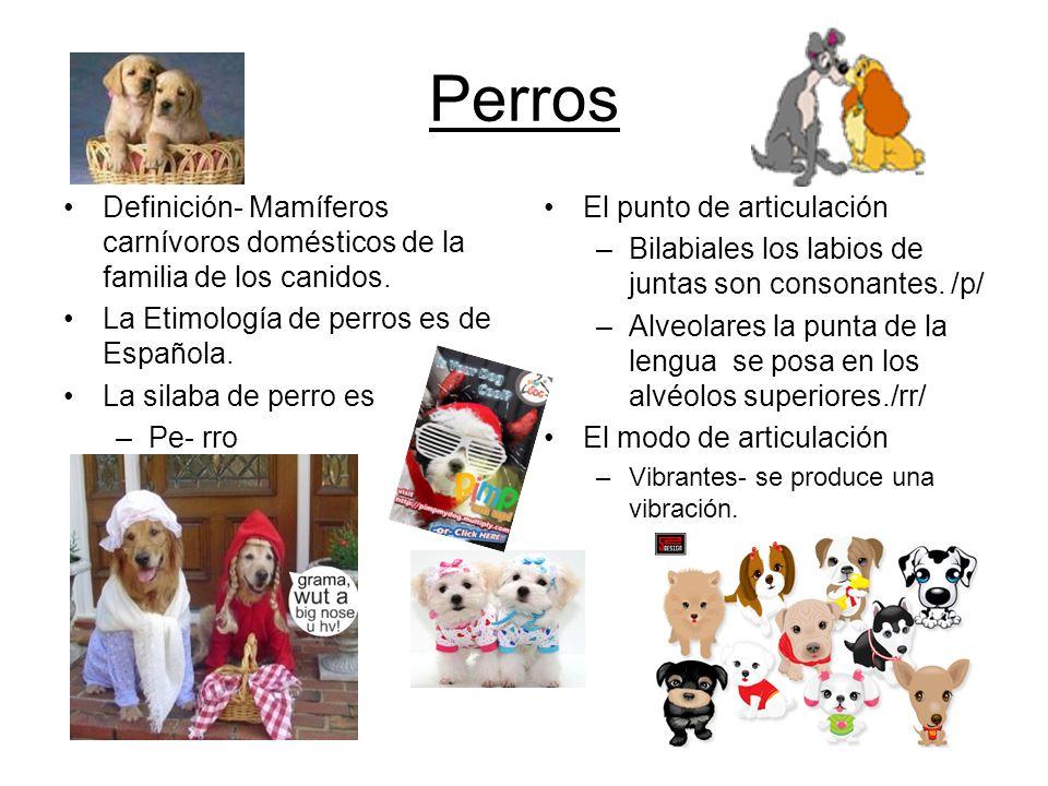 Perros Definición- Mamíferos carnívoros domésticos de la familia de los canidos. La Etimología de perros es de Española.