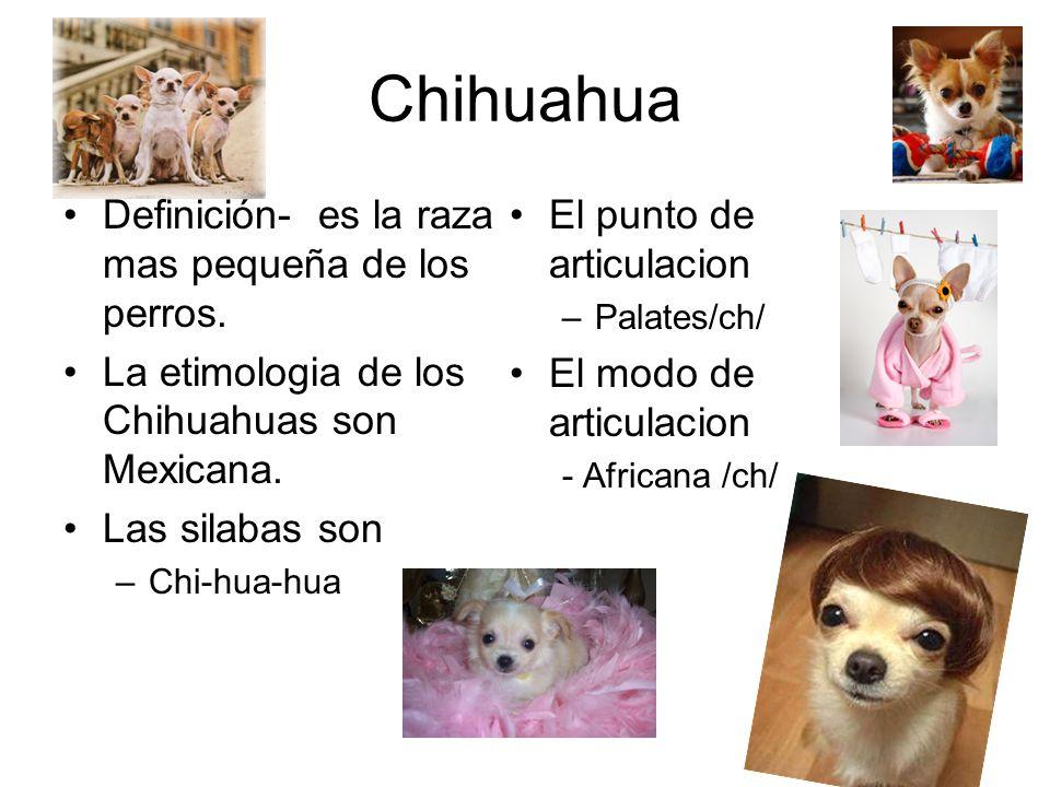 Chihuahua Definición- es la raza mas pequeña de los perros.