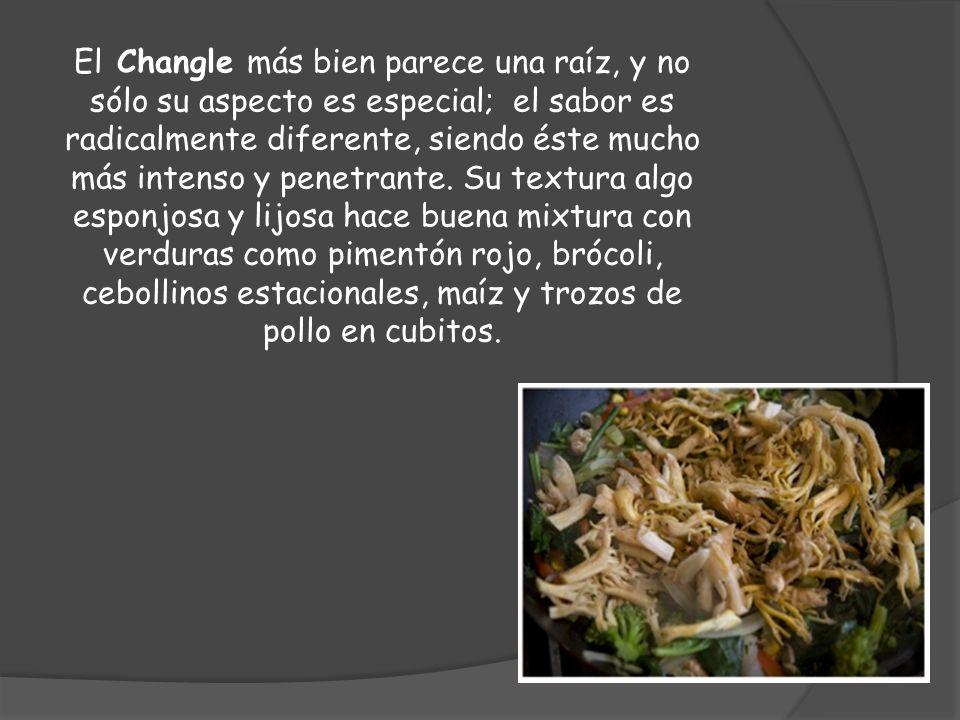 El Changle más bien parece una raíz, y no sólo su aspecto es especial; el sabor es radicalmente diferente, siendo éste mucho más intenso y penetrante.