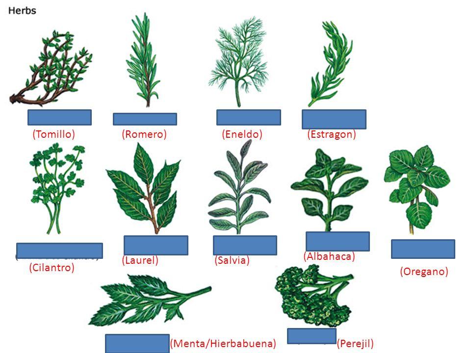 (Tomillo) (Romero) (Eneldo) (Estragon) (Cebolla de Hoja) (Albahaca) (Laurel) (Salvia) (Cilantro)