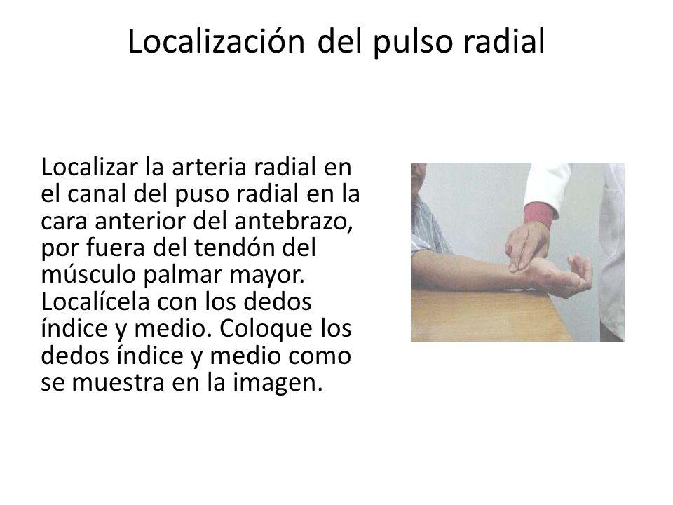 Localización del pulso radial