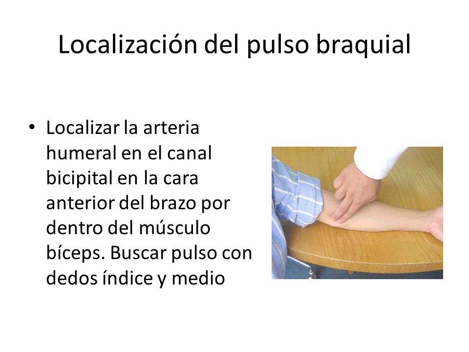 Localización del pulso braquial