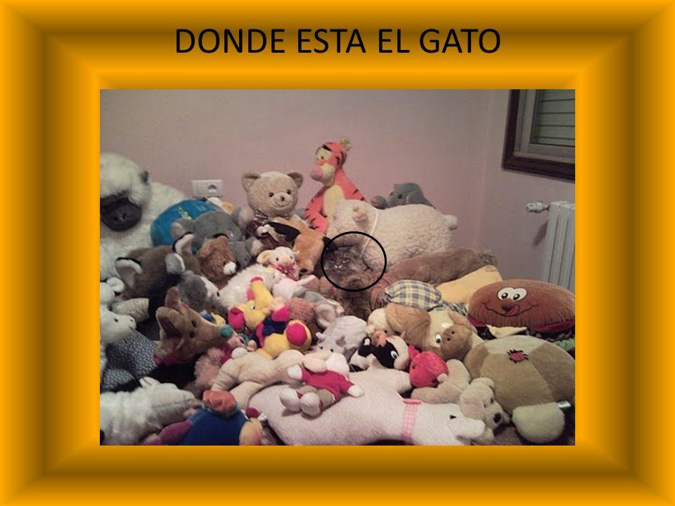 DONDE ESTA EL GATO