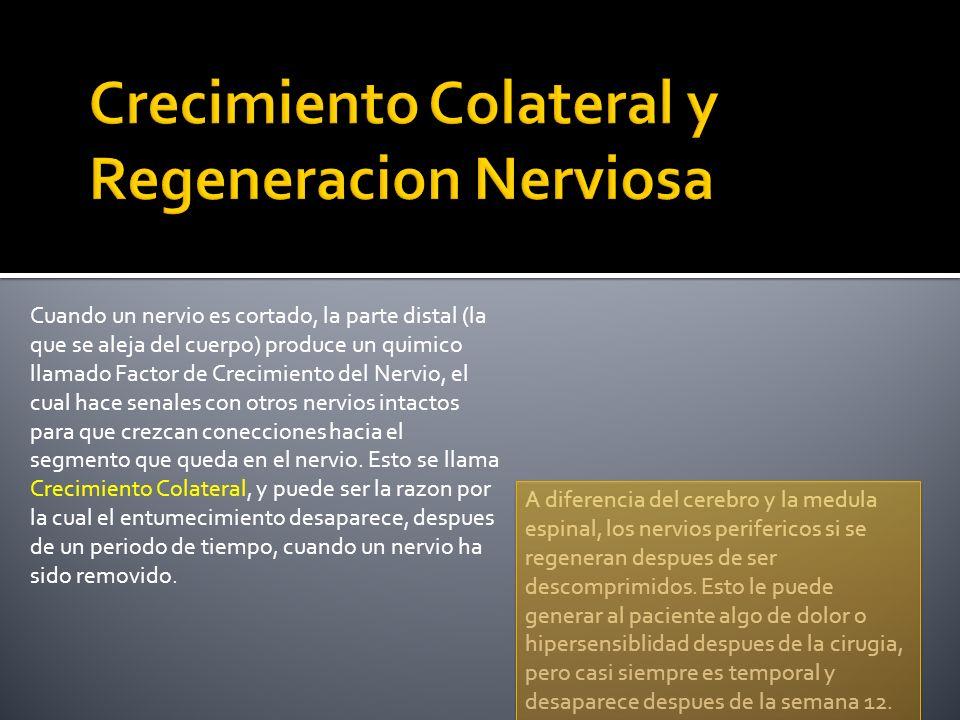 Crecimiento Colateral y Regeneracion Nerviosa