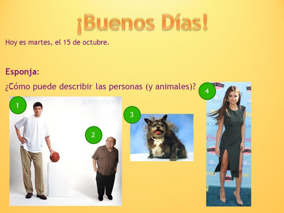 ¡Buenos Días! Hoy es martes, el 15 de octubre. Esponja: ¿Cómo puede describir las personas (y animales)