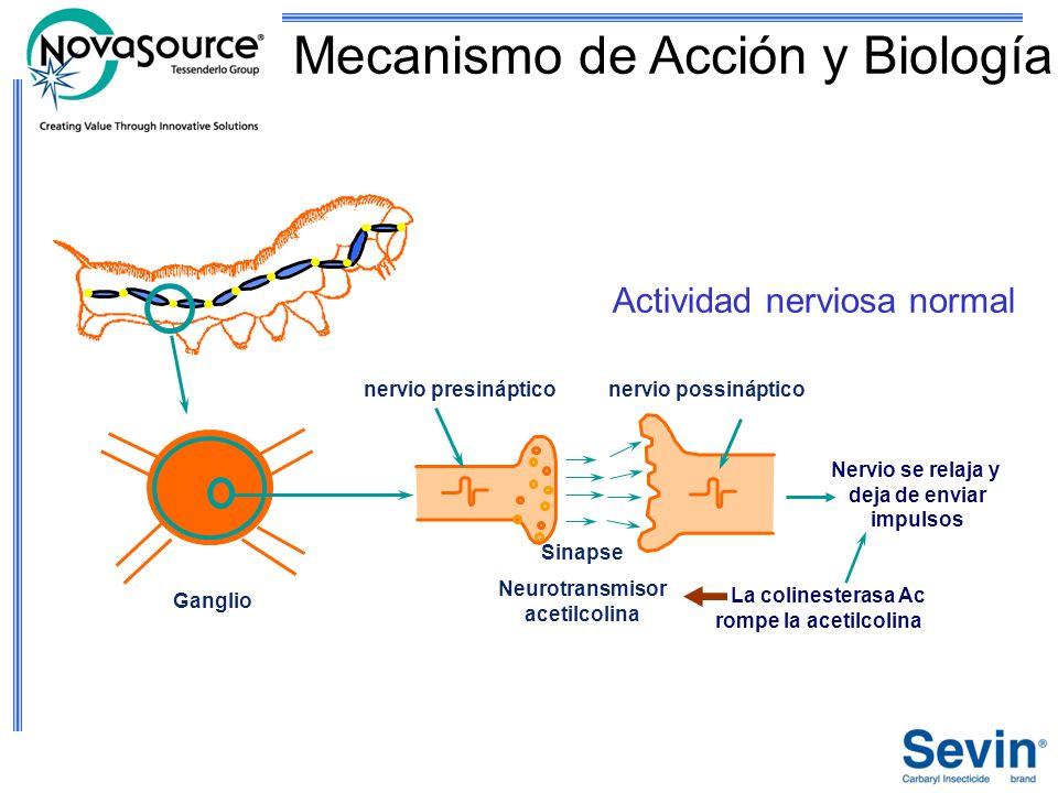 Neurotransmisor acetilcolina