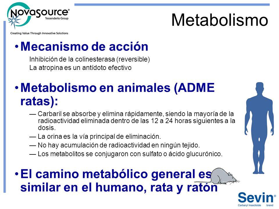 Metabolismo Mecanismo de acción Metabolismo en animales (ADME ratas):